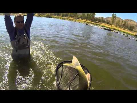 WildGuys - Catching a 9,5 lbs Largemouth Yellowfish on the Vaal River