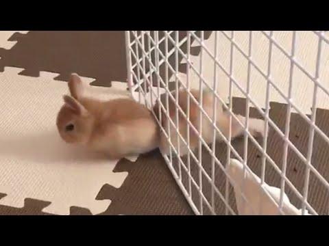 Pet Escape Artists | Funny Pet Video Compilation