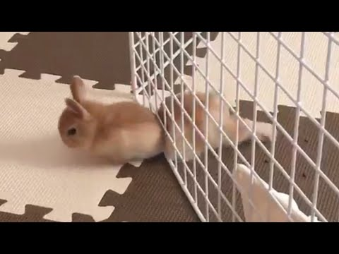 Pet Escape Artists | Funny Pet Video Compilation