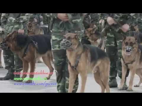 Biểu diễn võ thuật và chó chiến đấu của bộ đội biên phòng Hải Phòng 2015