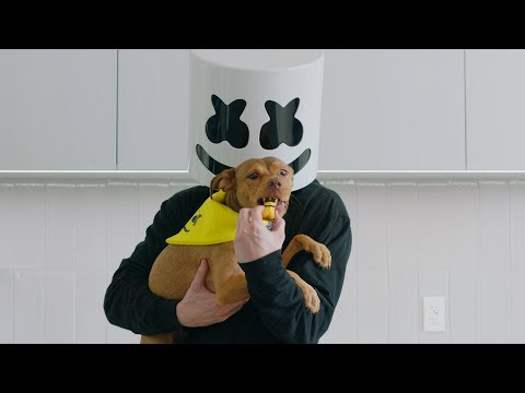 "How To Make ""Happier"" Dog Treats 
