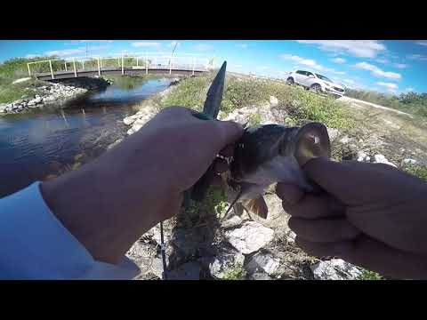 Winter Jerkbait Fishing L67 Canal Water Levels LOW (Florida, Everglades - Tamiami Trail)