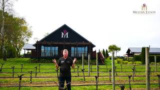 Phil in the Melton Estate Pinot Noir Rows
