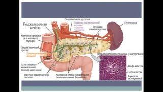 Ацетонемический синдром или пакреатит