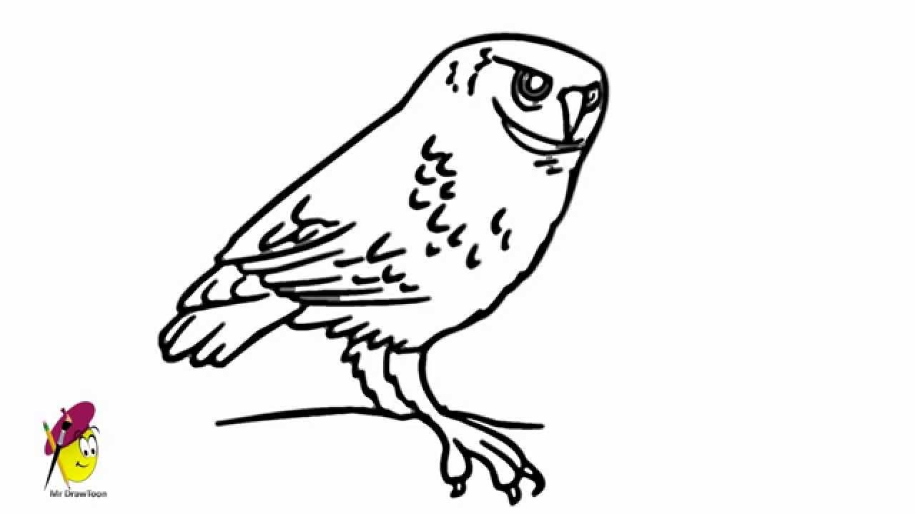 how to draw a snowy owl easy