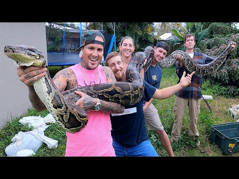 World Record Invasive Burmese Python caught in South Florida !