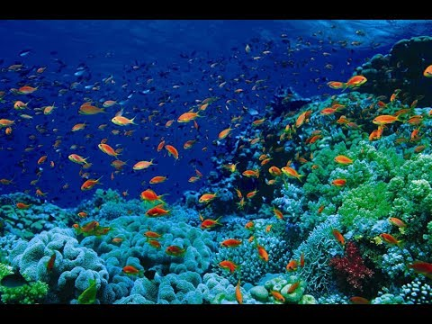 Оазис Австралии. Коралловый риф Нингалу.