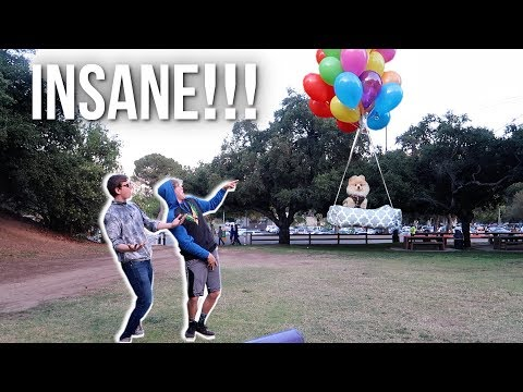 Thumbnail: FLYING MY DOG WITH GIANT HELIUM BALLOONS!
