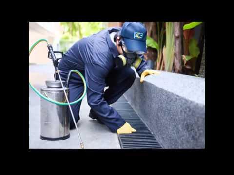Top Secret 1000 PCS. Global Pest Control Application Tricks