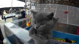 Красавицы Кошки и Котята на Птичьем Рынке на Куреневке в Киеве!