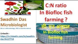 C:N Ratio and Ammonia Control in BioFloc  BioFloc fish