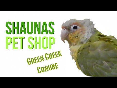 Shaunas Pet Shop: Green Cheek Conure