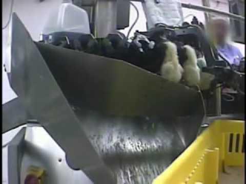 Kinh hoàng nuôi và ấp trứng gà công nghiệp