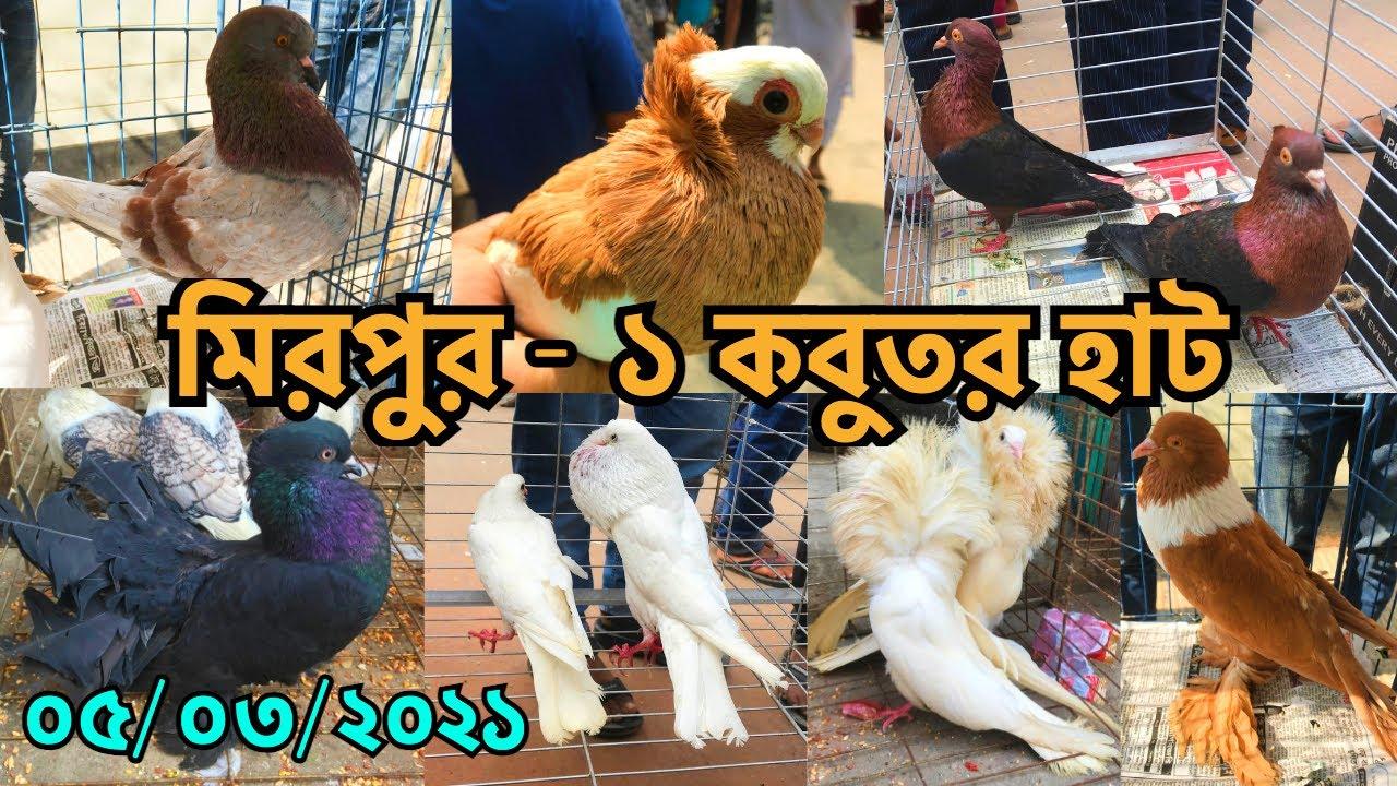 রকমারি কবুতরে জমে উঠেছে মিরপুর - ১ কবুতর হাট || দামের মিশ্র প্রতিক্রিয়া || Pigeon Market (V - 244)