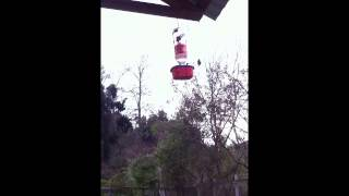 Recycled 2 Liter Homemade Hummingbird Feeder Works In Action. Picaflores Bebedor!!