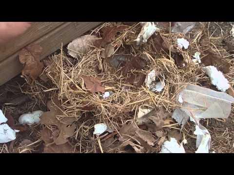 Pack Rats, Rats Nest Insulation.