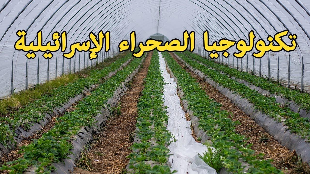 تعرف الى اسرائيل – تكنولوجيا الصحراء الإسرائيلية تحول الرمال إلى أراض صالحة للزراعة