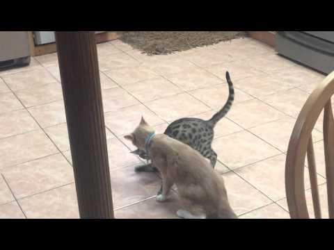 My Cats fighting Round 2