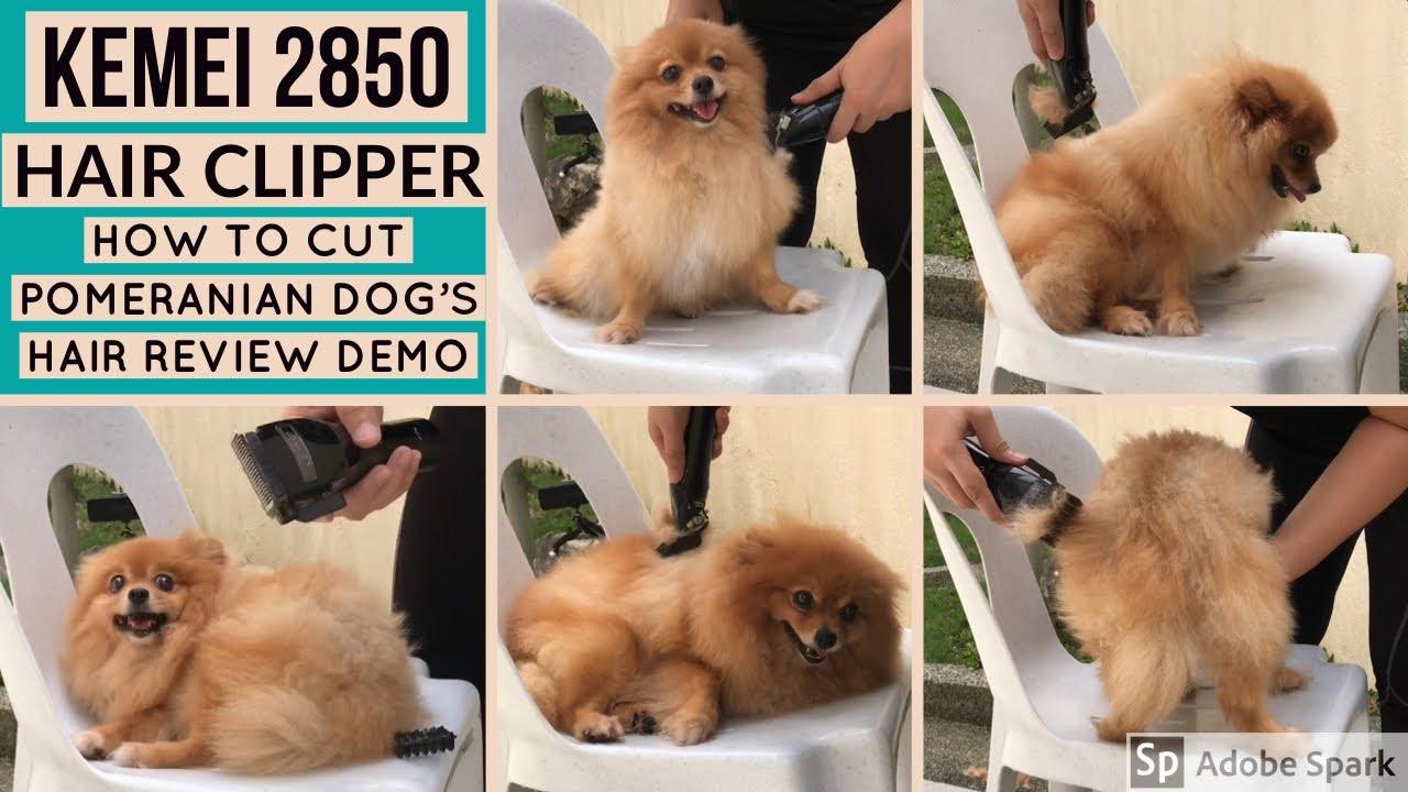 Kemei 10 - Dog Hair Clipper Demo How to Cut Pomeranian Dog's Hair Review