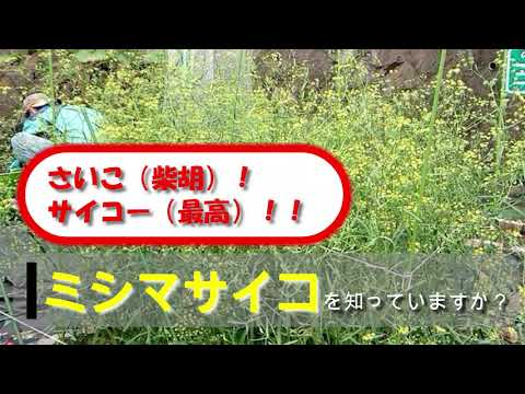 ミシマサイコを知っていますか?