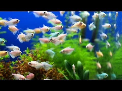 Why Fish Tank Still Smells After Cleanup | Aquarium Care