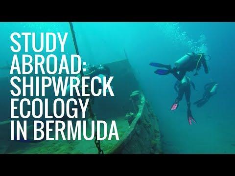Study Abroad: Shipwreck Ecology in Bermuda