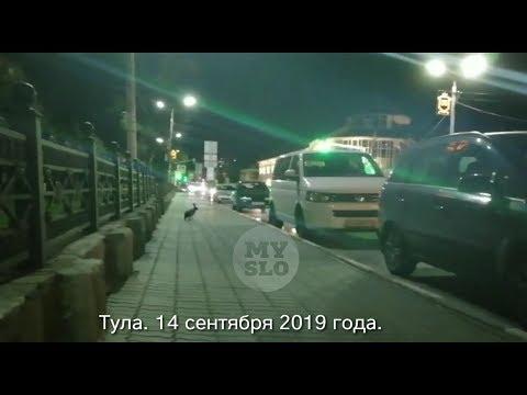 Бегающего возле Тульского кремля зайца снял на видео очевидец