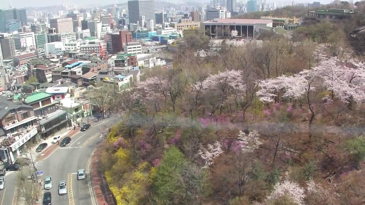 櫻花 韓國首爾南山公園 17 April 2011 - YouTube