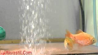 Аквариумные рыбки в Аквастиле