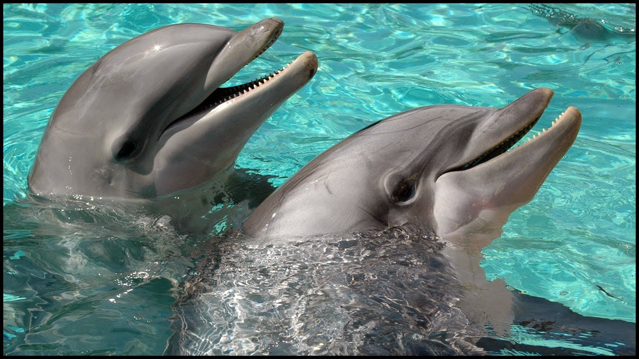 images of dolphins playing - photo #20