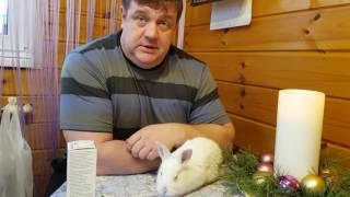 Заболел крольчонок МИКСОМАТОЗ или КОНЪЮНКТИВИТ?