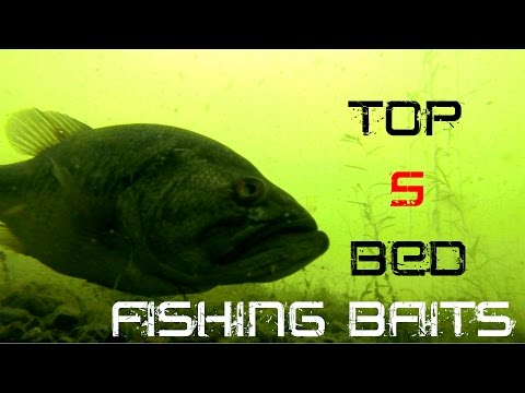 Top 5 Baits For Bed Fishing