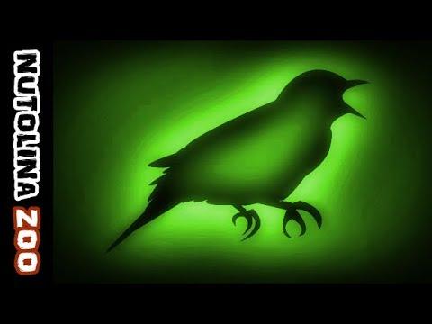 Nightingale sound / Nightingale singing / Animal sounds nightingale