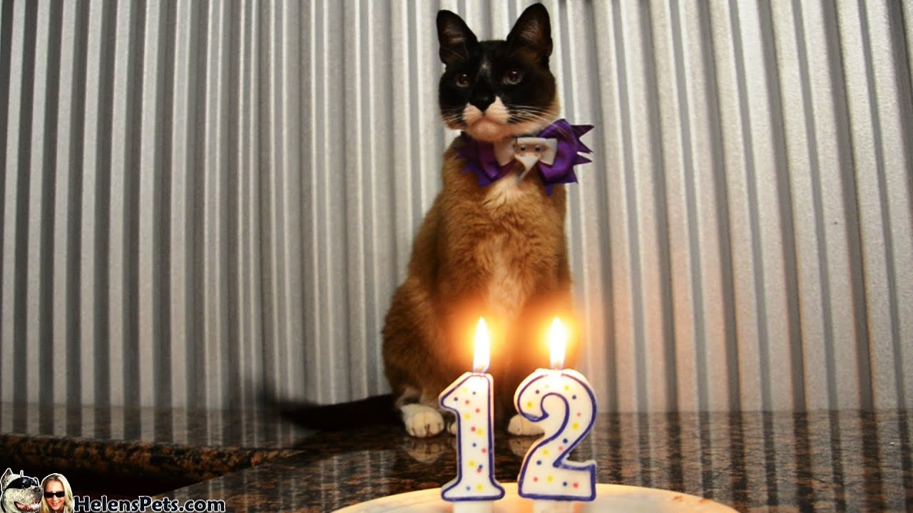 Cat Max Arthurs 12th Birthday Party With Cake And Candles