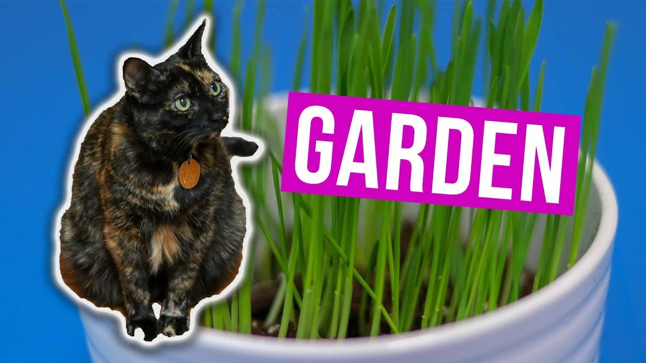 Growing A Cat Grass Garden Indoors For My Gato Jen Talks Forever Youtube