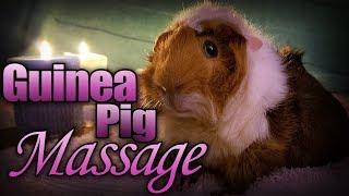 Video Guinea Pig Massage - Pregnant Mama download MP3, 3GP, MP4, WEBM, AVI, FLV September 2018
