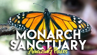 MONARCH BUTTERFLY SANCTUARY EL ROSARIO AND SIERRA CHINCUA