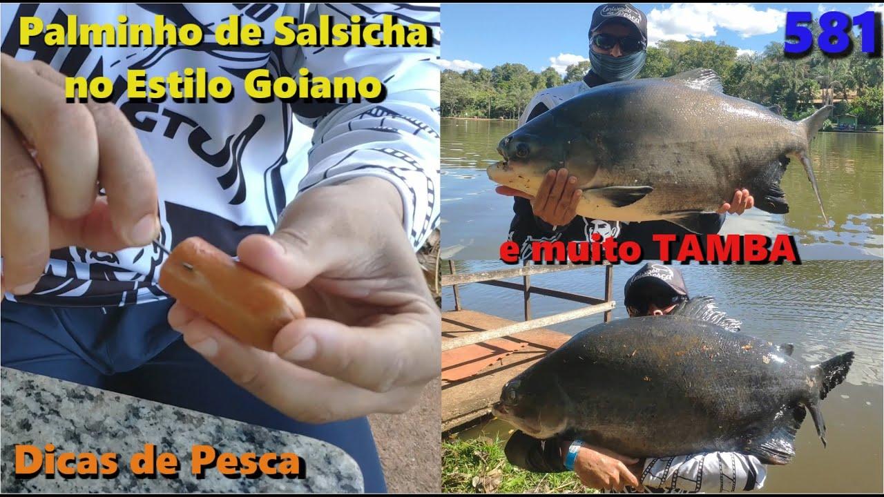 Clube de Pesca Lago Verde - Dicas do estilo goiano e grandes peixes - Programas 581 Pesca e Pescaria