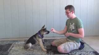 Preparing For Dog Training: Food Lure, Focus Cue, And Charging A Clicker