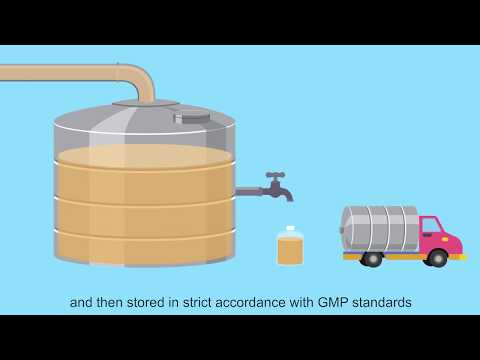 Production Process Of Angel Baker's Yeast