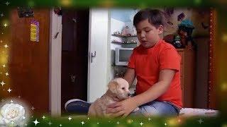 Amor Callejero   La Rosa de Guadalupe