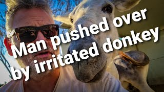 Man pushed over by irritated donkey....MUST WATCH!