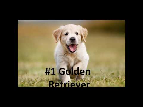 Top 10 Friendliest Dog Breeds