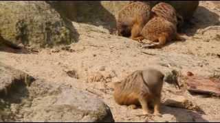 Erdmännchen das Leben der putzigen Tiere in einzigartigen Aufnahmen - Lebensraum