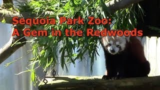 Sequoia Park Zoo: A Gem in the Redwoods
