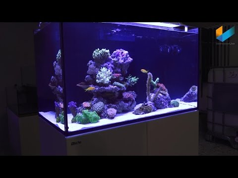 Red Sea REEFER Aquarium Presentation by Georg of Red Sea | Review | Meerwasser Live TV