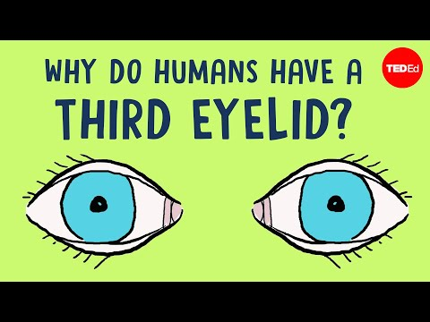 Video image: Why do humans have a third eyelid? - Dorsa Amin