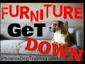 TEACH YOUR DOG OFF FURNITURE AND UP WHEN INVITED