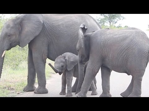 Cute Elephant Discovers Trunk
