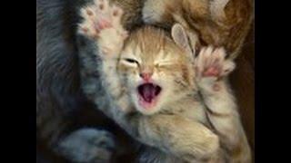 прикольные видео-фото котэ с неоднозначными надписями!!!